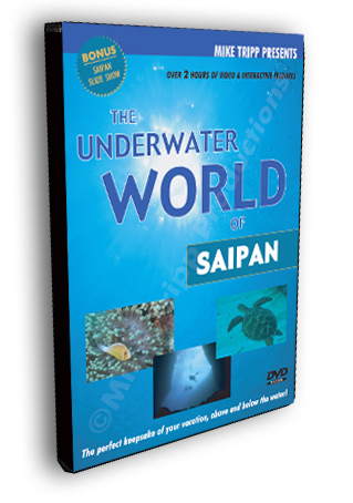 underwater world of saipan